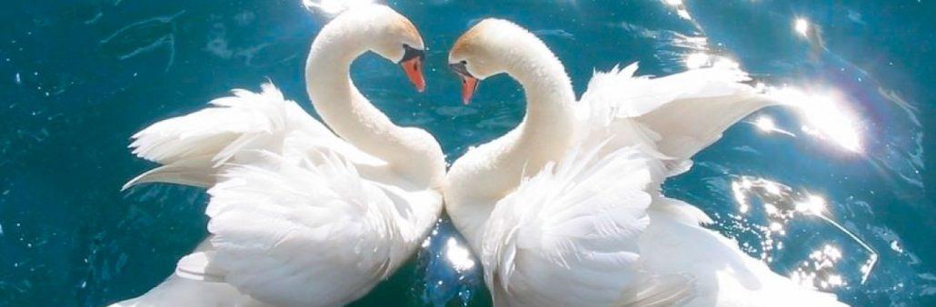 Soin quantique Réparation des blessures de l'Amour -Alteralliah